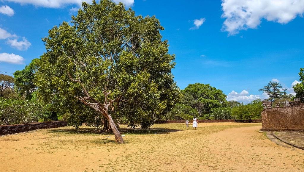 Ruinele de la Polonnaruwa – a doua capitală din Sri Lanka