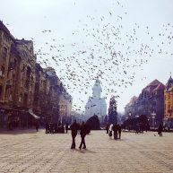 Timișoara City Tours – recomandare pentru vizita ta în Timișoara