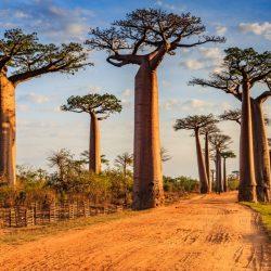 Crăciun în Madagascar, 412 euro dus-întors Milano-Antananarivo