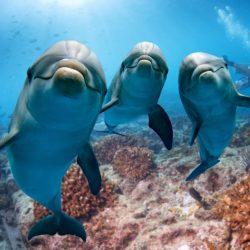 Motive pentru care e greșit să mergem la reprezentații cu delfini